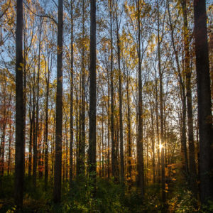 """""""Fall Forest No.1"""" by Thomas James Caldwell is licensed under CC BY-ND 2.0"""